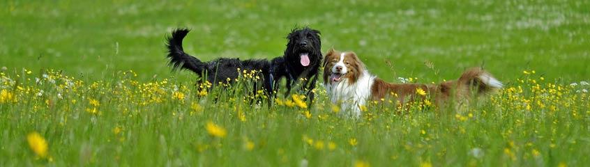 Bio Hundefutter